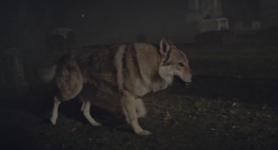 Желтый волк из клипа Yelawolf и Eminem Best Friend