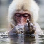Eminem фак fuck обезьяна